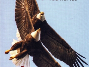 Zcc8civotinjski-haiku-naslovnica-a